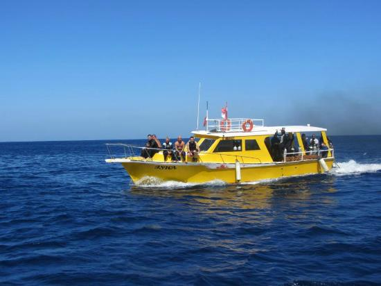 Infinity Bay Spa and Beach Resort: Infinity Bay Dive Boat