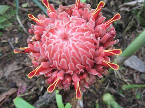 Arenal Kioro: One of the many flowers on the grounds