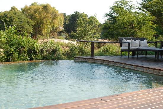Lion Sands River Lodge: pool