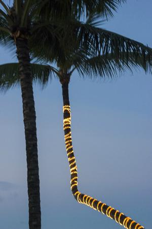 Velero Beach Resort: lighted palm tree