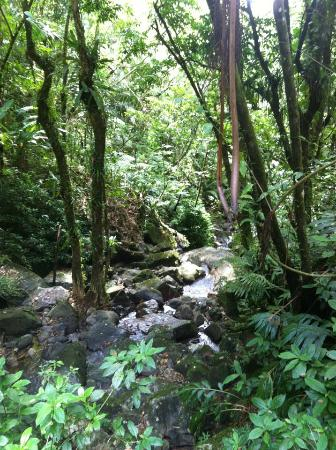 Doubletree by Hilton San Juan : Rainforest