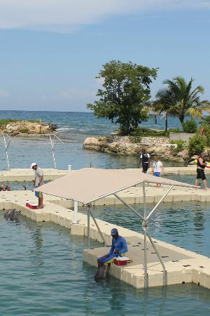 Secrets St. James Montego Bay: The Dolphin Cove near St. James
