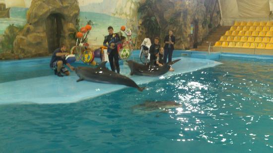 Kharkov Dolphinarium: Лечение дельфинами