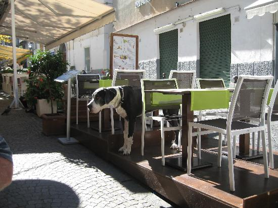 Sorrento Apartments: lovely to eat outside and people watch.