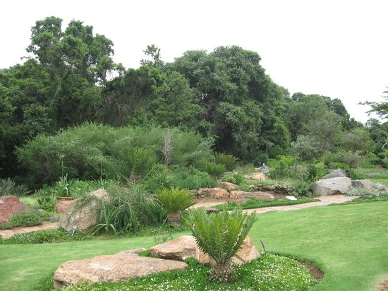Walter Sisulu National Botanical Gardens: Cycads lining up in the rain.