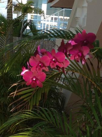 Tres Sirenas Beach Inn: gorgeous flowers
