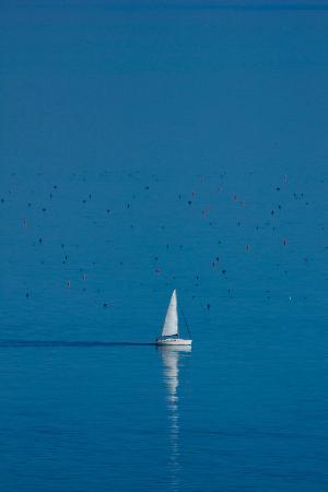 Parque Natural Monte San Bartolo: Barca a Vela e boe davanti alla spiaggia di Fiorenzuola di Focara.