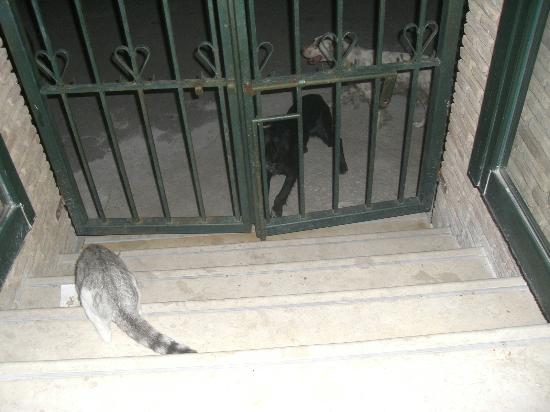 Zante Plaza Hotel & Apartments: dogs and cats coming over for dinner :)