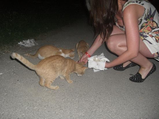Zante Plaza Hotel & Apartments: me feeding the kittens :)