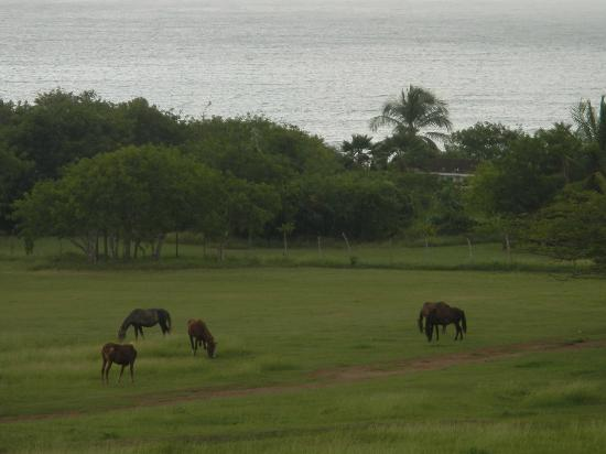Hacienda Tamarindo: Wild horses -- view from Room One