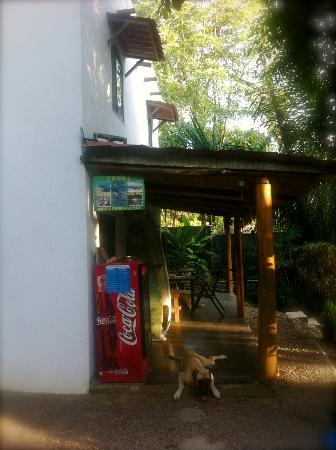Cuesta Arriba Hotel: friendly dog