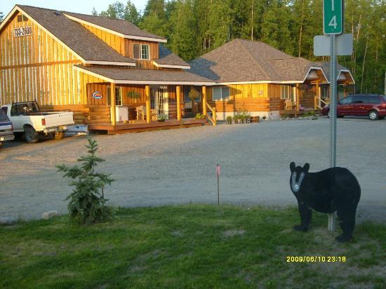 Denali Fireside Cabins & Suites: sneaky bear