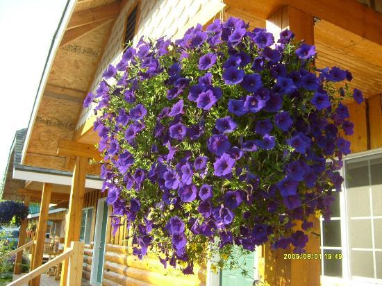 Denali Fireside Cabins & Suites: hanging petunias