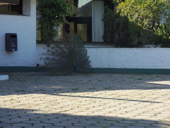 Hotel Ayui Spa & Termal: mas pavos reales