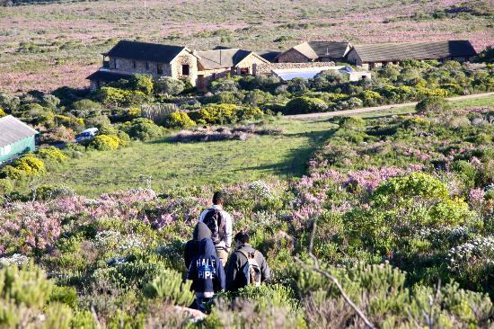 Grootbos Private Nature Reserve: Fauna/Bird Walk