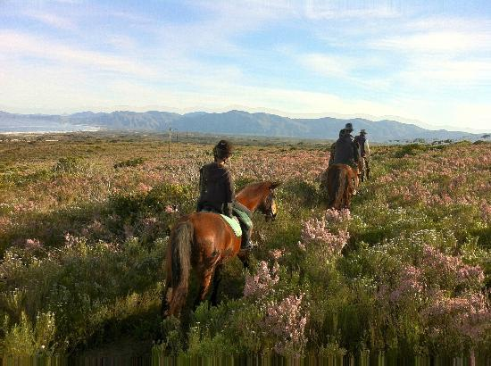 Grootbos Private Nature Reserve: Horse riding