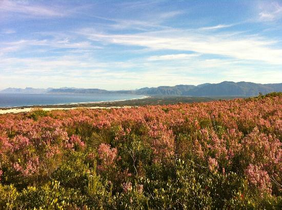 Grootbos Private Nature Reserve: Flower bed