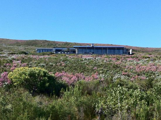 Grootbos Private Nature Reserve: Forest Lodge