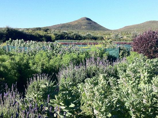 Grootbos Private Nature Reserve: Training school for local women