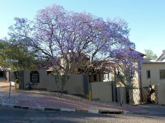 Olive Grove Jacaranda