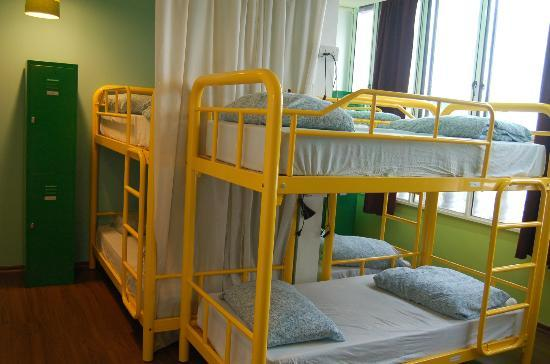 Beary Nice! by a beary good hostel: Mixed Dorms