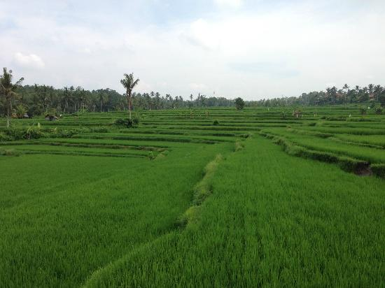 Maya Ubud Resort & Spa: Nature walk
