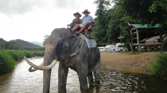 Karon Living Room: Очень добрый слоник