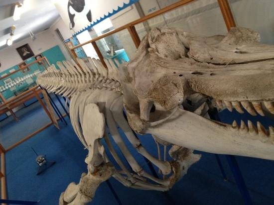 Killer Whale Museum: Whale skeleton