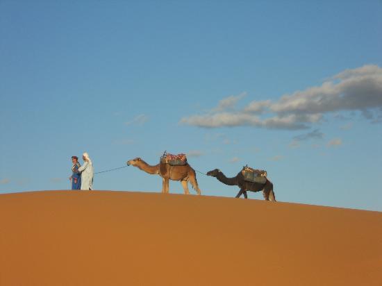 Dar Jnan Tiouira: Mostapha Beri et les 2 chameaux 2487 et 2489