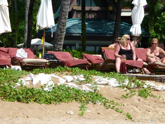 Centara Grand Beach Resort & Villas Krabi: Starnd wenig gepflegt