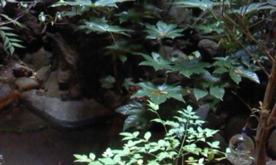 Kagurazaka: 和風内の坪庭。
