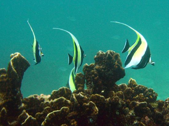 West Coast Divers: Great vis 