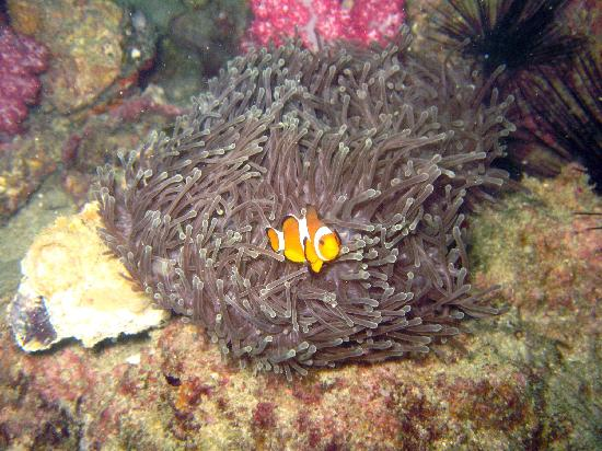 West Coast Divers: Nemo
