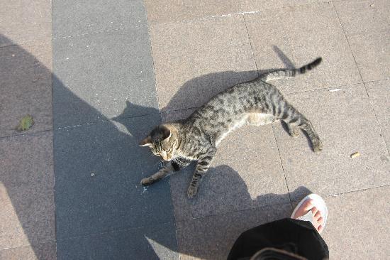 Sultanahmet District: More cats in Sultahnamet