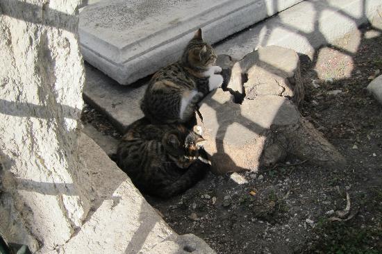 Sultanahmet District: cats in Sultanahmet
