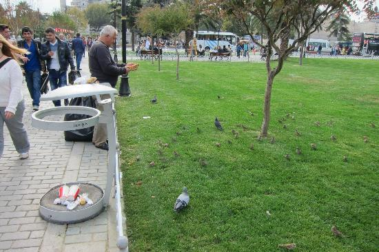 Sultanahmet District: Feeding pigeons in park