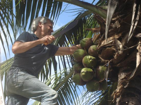 Aerolito Tulum: My husband couldn't resist cutting down some ripe coconuts, and I loved to eat them!