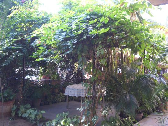 Sapna: verdant garden gazebo