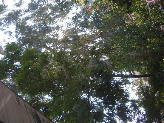 Sapna: verdant garden
