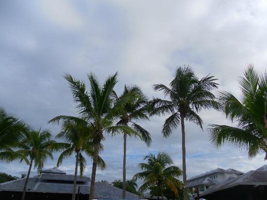 Grand Paradise Playa Dorada: LA PLAGE ET SES PALMIERS