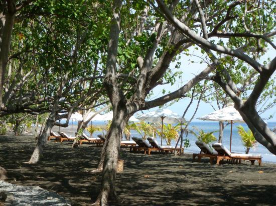Matahari Beach Resort & Spa: Beach