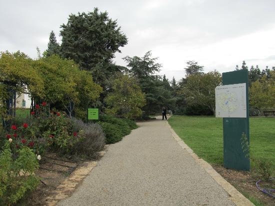 Wohl Rose Garden