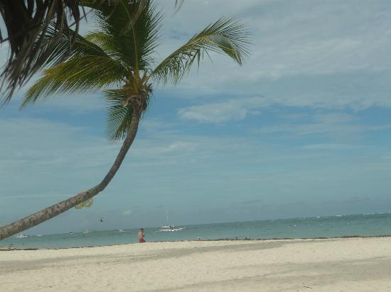 Paradisus Palma Real Golf & Spa Resort: Palm tree on beach 