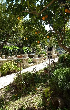 Il Giardino dei Mandarini: Un pezzo del giardino