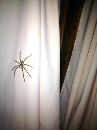 The Lodge at Chaa Creek: Two feet from my pillow. Almost as large my hand with outstretched fingers
