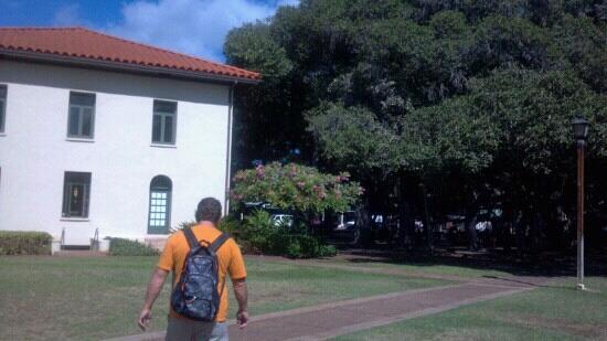 Old Lahaina Courthouse : Courthouse & banyan tree