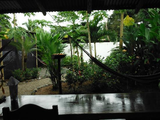 Cabinas Tropicales: View from kitchen