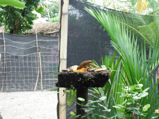 Cabinas Tropicales: Bird feeder