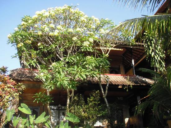 Dewa Bungalows: Vue de la piscine