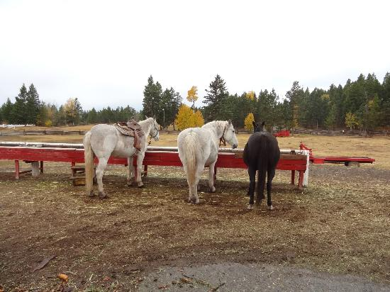Spruce Hill Resort & Spa: Loved the trail rides!